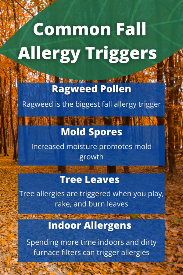 common fall allergy triggers infographic - Ragweed pollen, ragweed is the biggest fall allergy trigger; mold spores, increased moisture promotes mold growth' tree leaves, tree allergies are triggered when you play, rake, and burn leaves' indoor allergens, spending more time indoors and dirty furnace filters can trigger allergies. allergypreventions.com